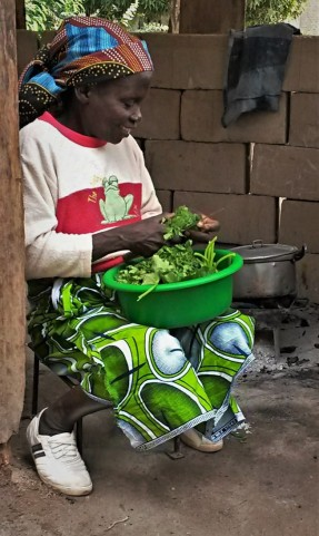 Preparing dinner of leafy cabbage, to be stewed with onions in coconut milk with peanut flour to make matapa.